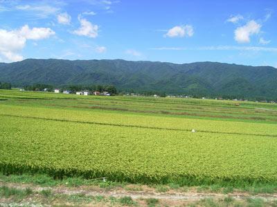 yamagata2.jpg