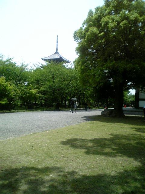 新緑の東寺